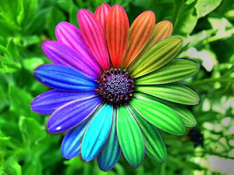 colorful flowers - Google Search | Hippie pictures