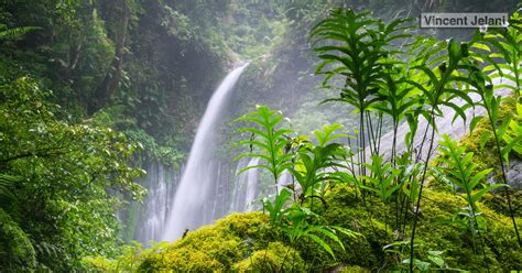 Southeast Asian Rainforests Threatened by Agriculture
